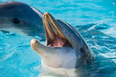 Dolphin portrait looking at you Royalty Free Stock Image