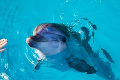Dolphin portrait while looking at you with open mouth. Marine life stock photos