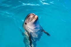 Dolphin portrait while looking at you with open mouth. Marine life stock images