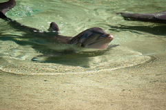 Dolphin Pose Stock Images