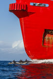 Dolphin and red cargo ship Stock Photos