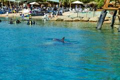 Dolphin reef on the Red Sea royalty free stock photos