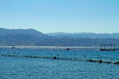 Dolphin reef on the Red Sea royalty free stock photo