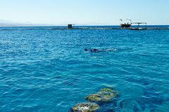 Dolphin reef on the Red Sea stock images