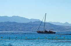 Dolphin reef on the Red Sea royalty free stock images