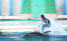 Dolphin rider. Motion. Speedy action Stock Photos