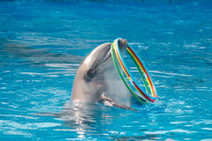 Dolphin and rings Stock Image