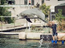 Dolphin's jump out of the water by instruction of the coach Royalty Free Stock Images