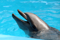 Dolphin's portrait Royalty Free Stock Photos