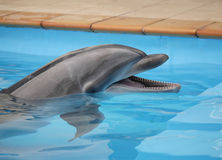 Dolphin's smile on the water. Dolphin's face on the water. Joy Stock Image