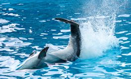 Dolphin`s tail over the water.  stock images