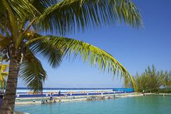 Dolphin sanctuary in Cayman islands, Caribbean. View of dolphin place in Grand Cayman, Caribbean stock photography
