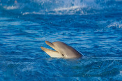 Dolphin at sea Royalty Free Stock Photos