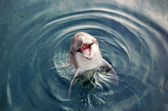 Dolphin in the sea royalty free stock photos