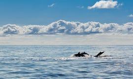 Dolphin seascape Stock Photos