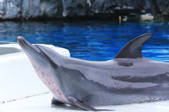 Dolphin show Stock Photos