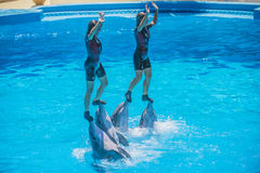 Dolphin show, art of balance Stock Photography
