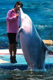 Dolphin Show Stock Photo