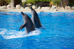 Dolphin show stock images