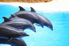 Dolphin show Stock Photo