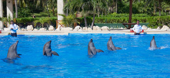 Dolphin show at Dolphinaris. TULUM, MEXICO: DECEMBER 2, 2016: Dolphins performing during a dolphin show with their trainers at Dolphinaris Tulum at Bahia stock image