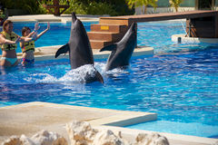 Dolphin show at Dolphinaris Stock Images