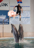Dolphin show in the Dolphinarium. Klaipeda, Lithuania - July 27: Dolphin show in the Dolphinarium at Lithuanian Sea museum on July 27, 2008 in Klaipeda stock photo