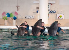Dolphin show in the Dolphinarium Stock Image