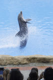 Dolphin. Show in arium Canary Islands royalty free stock image