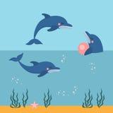 Dolphin show, dolphinarium, sea lion, seal, aqua circus, ocian animal Stock Image