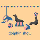 Dolphin show, dolphinarium, sea lion, seal, aqua circus, ocian animal. Dolphin show dolphinarium, sea lion, seal, aqua circus and ocian animal Royalty Free Stock Image