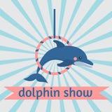 Dolphin show, dolphinarium, sea lion, seal, aqua circus, ocian animal. Dolphin show dolphinarium, sea lion, seal, aqua circus and ocian animal Stock Photos
