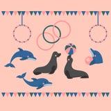 Dolphin show, dolphinarium, sea lion, seal, aqua circus, ocian animal. Dolphin show dolphinarium, sea lion, seal, aqua circus and ocian animal Royalty Free Stock Images