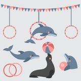 Dolphin show, dolphinarium, sea lion, seal, aqua circus, ocian animal. Dolphin show dolphinarium, sea lion, seal, aqua circus and ocian animal Royalty Free Stock Photography