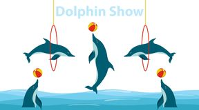 Dolphin show, dolphins jump over the ring and throw the ball. royalty free illustration