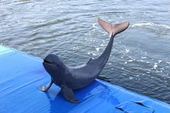 The dolphin Royalty Free Stock Photos