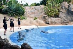 Dolphin show in Loro Park in Puerto de la Cruz Stock Photography