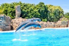 Dolphin show in Loro park, Tenerife, Canary islands, Spain royalty free stock photo