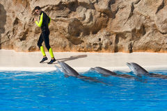 Dolphin Show at Loro Parque Royalty Free Stock Image