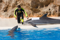 Dolphin Show at Loro Parque Stock Photography