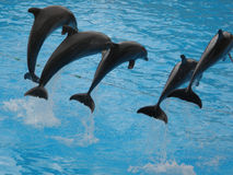 Dolphin show in Loro Parque. Tenerife, Spain Stock Image