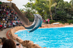 Dolphin show in the Loro Parque, which is now Tenerife`s second largest attraction with europe`s biggest dolphin pool in Tenerife Royalty Free Stock Image