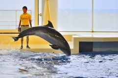 Dolphin show in Oarai Aqua World Mito Japan. This picture illustrate a dolphin jumping into the water Stock Images