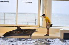 Dolphin show in Oarai Aqua World Mito Japan. This picture illustrates a dolphin go on board to play with its trainer Royalty Free Stock Images