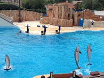 Dolphin show at Parc Asterix, France Stock Image