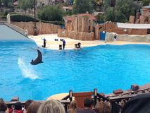 Dolphin show in Parc Asterix, France Stock Images