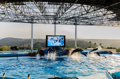 Dolphin show in the pool Stock Image