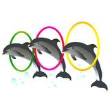 Dolphin Show with rings Royalty Free Stock Photography