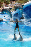 Dolphin Show - Save the seas message Stock Images