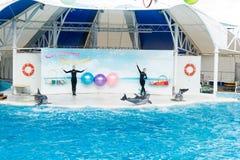 Dolphin show scene Royalty Free Stock Photos